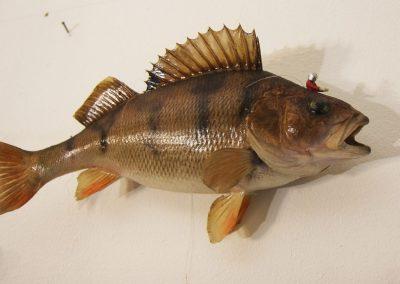Viertelfestival: Ist Kunst für die Fisch?